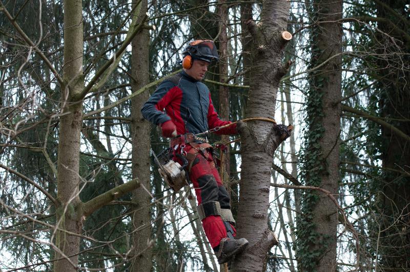 Baumfällung mit Professioneller Klettertechnik