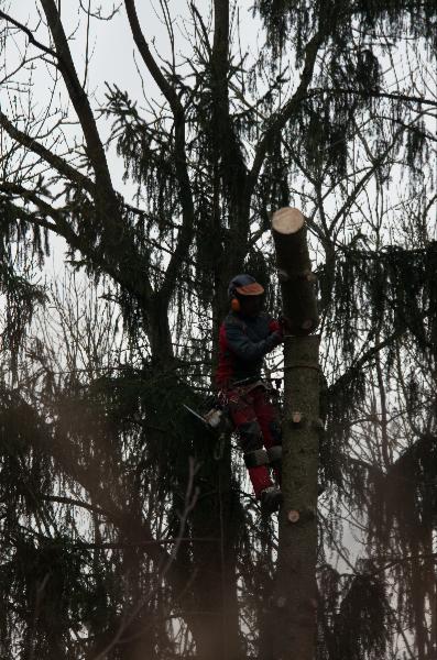 Baumfällungen auf begrenztem Platz