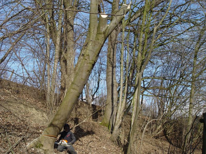 Einfache Baumfällung in Hanglage
