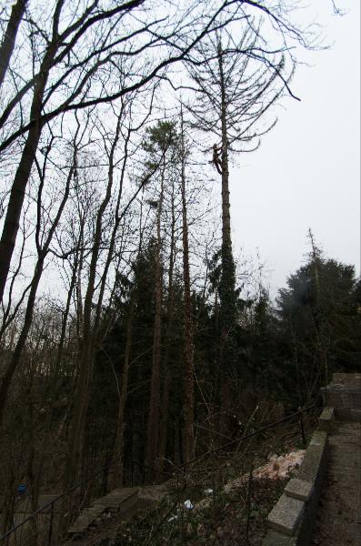 Baumfällungen in extremen Lagen und großen Höhen
