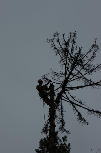 Kappen der Baumkronen auch in extremen Höhen
